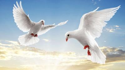 Flying white doves ppt backgrounds