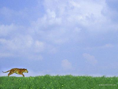 Runing Tiger ppt backgrounds