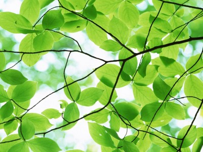 Bark of a tree pleasant green leaves ppt backgrounds