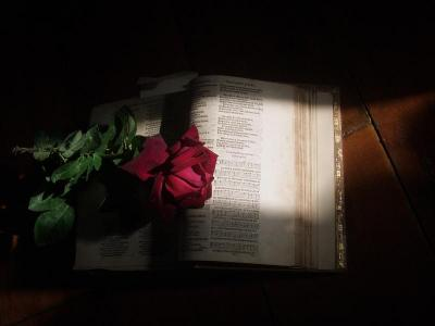 Sunlight red rose on the book  ppt backgrounds