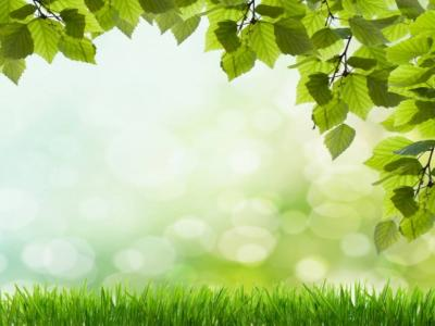 Beautiful green grass ppt backgrounds